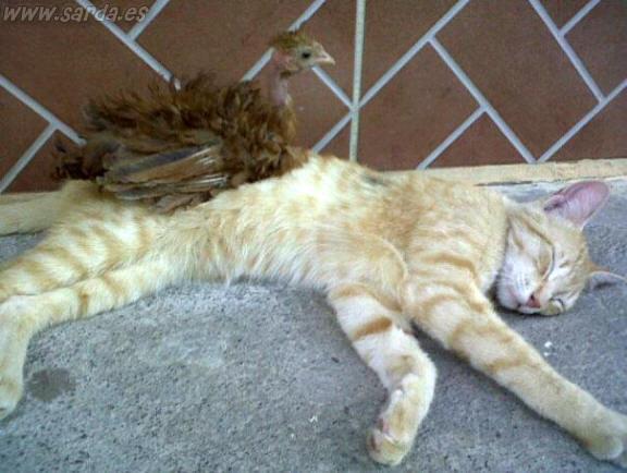 gatito manso