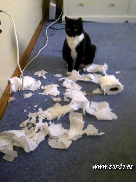 Gatos disimulados...
