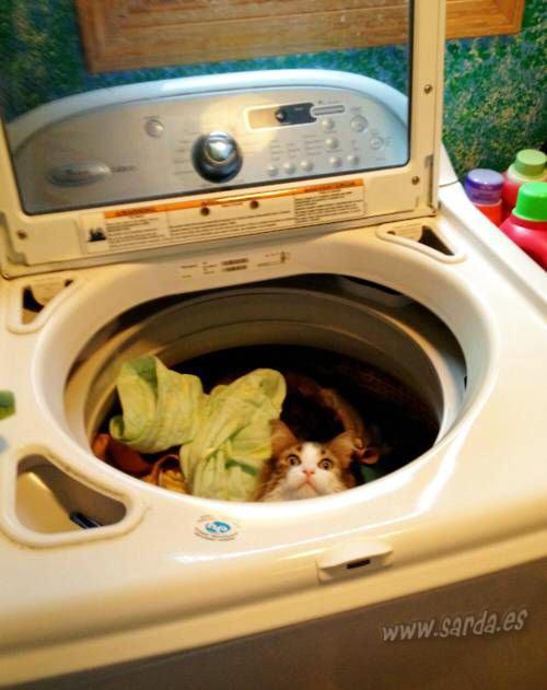 gato lavadora