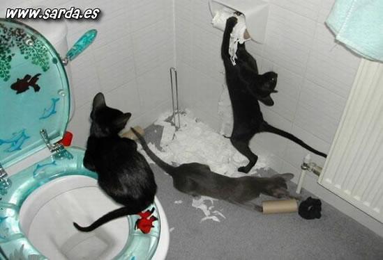 gatos malos