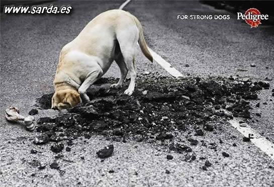 Pedigree, un alimento potente para los perros
