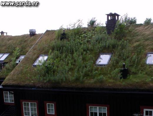 Curiosas casas con vegetacion total