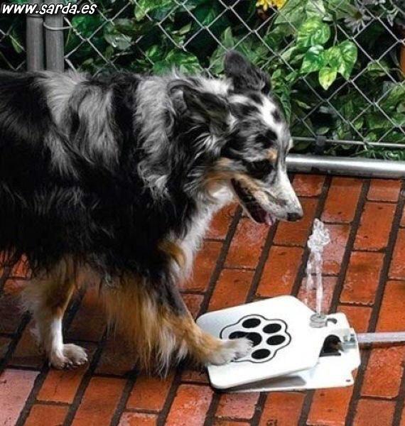 Invento fuente perros