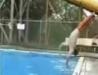 torpes saltando en la piscina